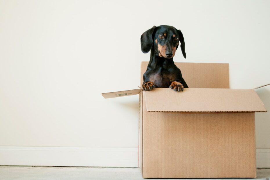 verhuist of verhuisd
